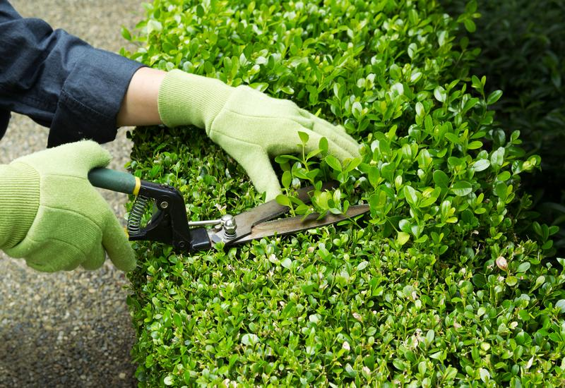 Yard-Maintenance-Kent-WA