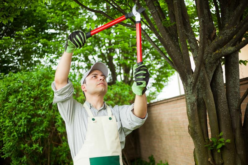 Tree-Pruning-Burien-WA