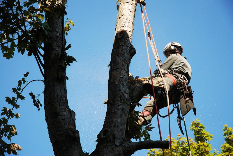 Tree-Service-Burien-WA